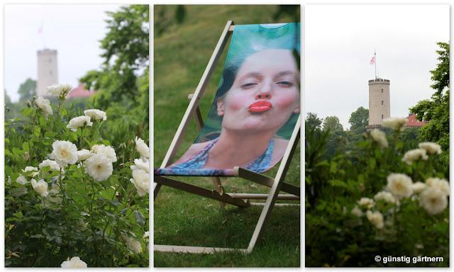 weise rosen gemalt
