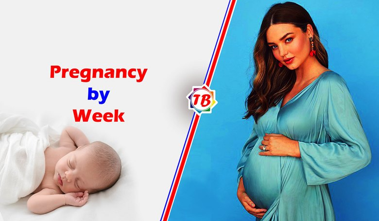 Pregnancy by Week