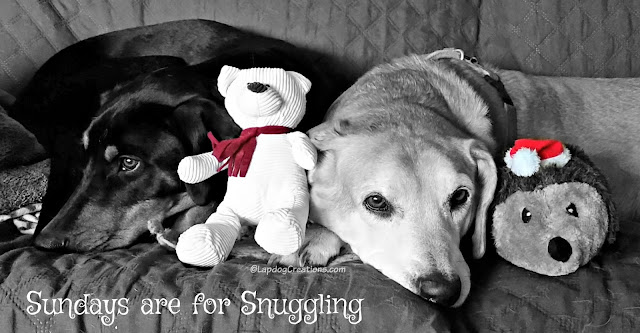 two rescued dogs cuddling with toys