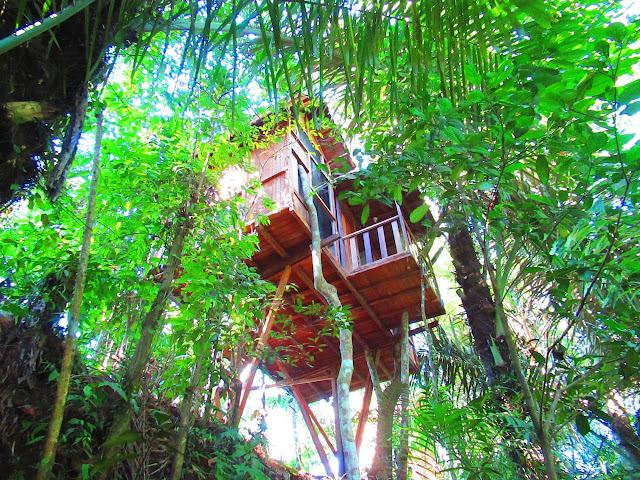 Kenangan Indah di Hars Garden Treehouse, Penginapan Ramah Lingkungan di Ubud, Bali