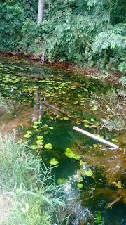 Resultado de imagem para blog do icaro gomes Sistema Loureiro água em Maracanã Pará