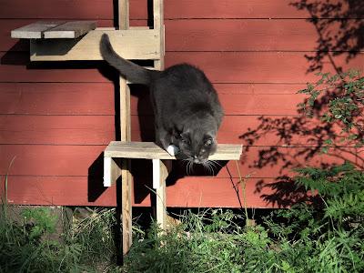 Kissa, kiipeilypuu, Pinkku, kesä
