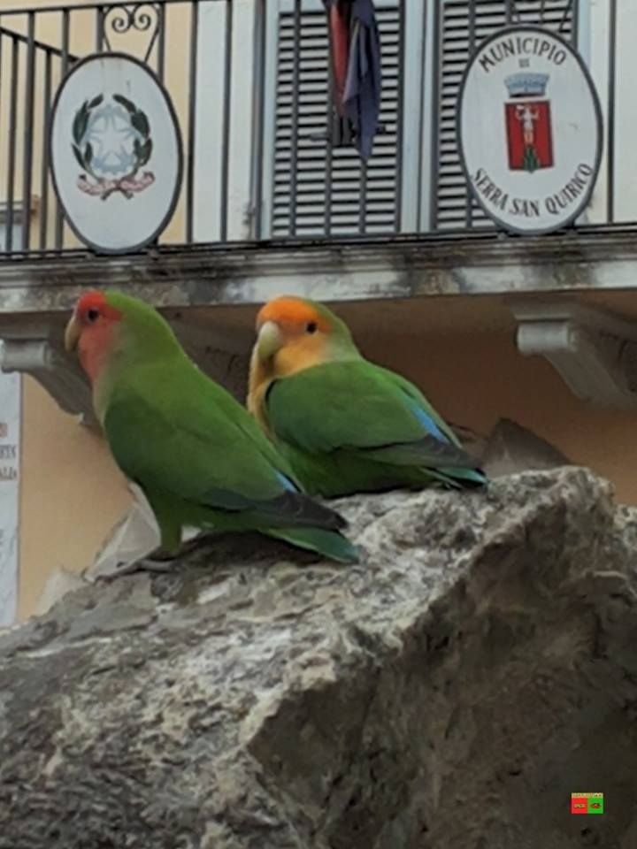 il blog di Angelo Cuicchi: I pappagalli in piazza