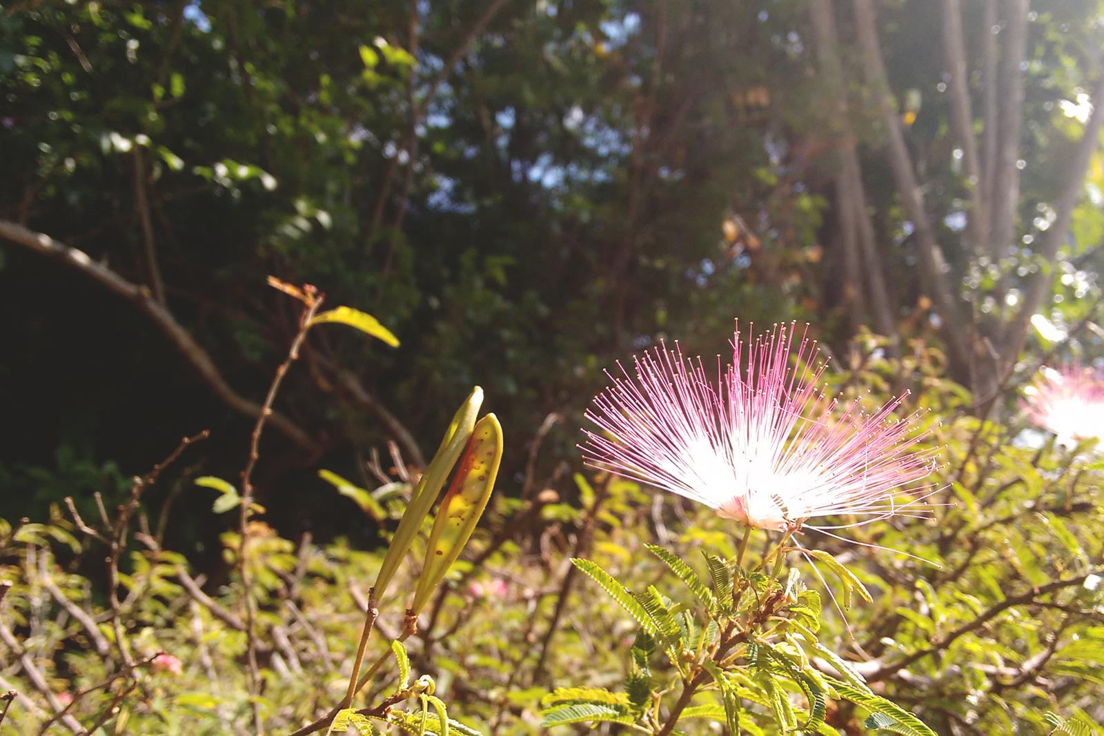 flor diferente rosa