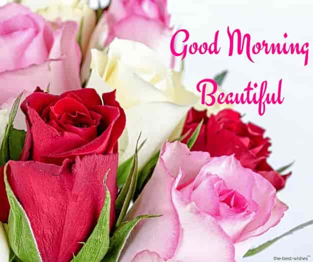 good morning roses for beautiful girl