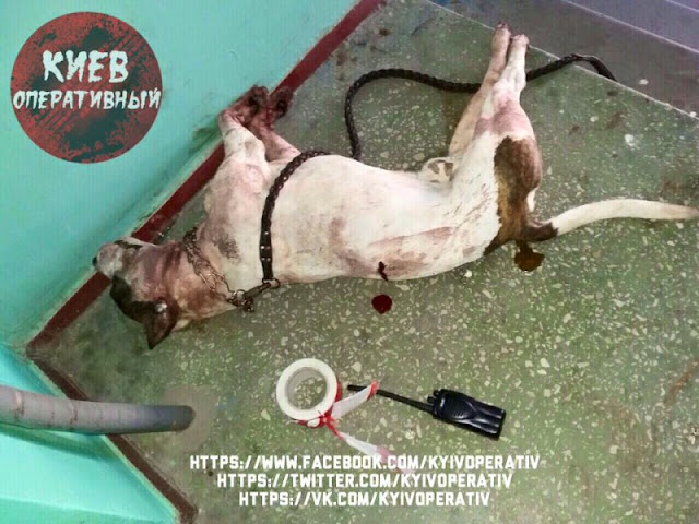 Поліцейський використав табельну зброю і одним пострілом застрелив собаку.