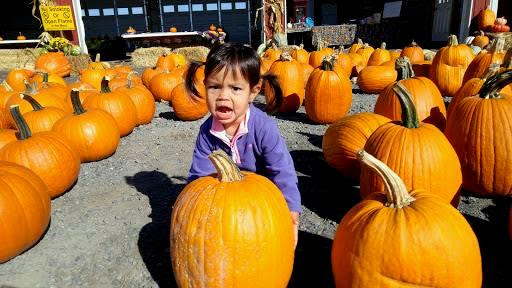 Pumpkins-Raub's-Farm-Market-Easton-PA-tasteasyougo.com