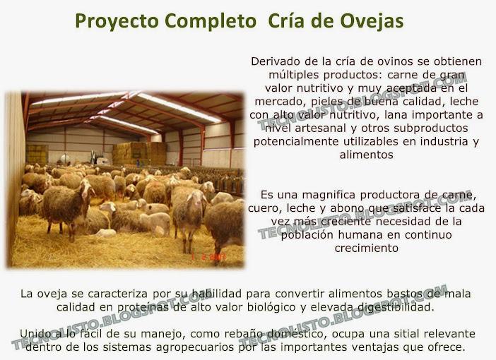 """""""manual cria de ovejas"""""""