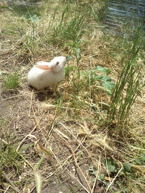 Tavşanların anısına