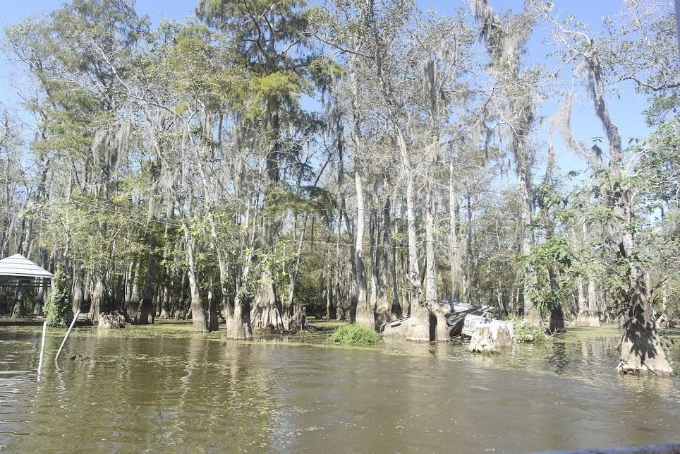 trek america lake charles swamp tour southern sun