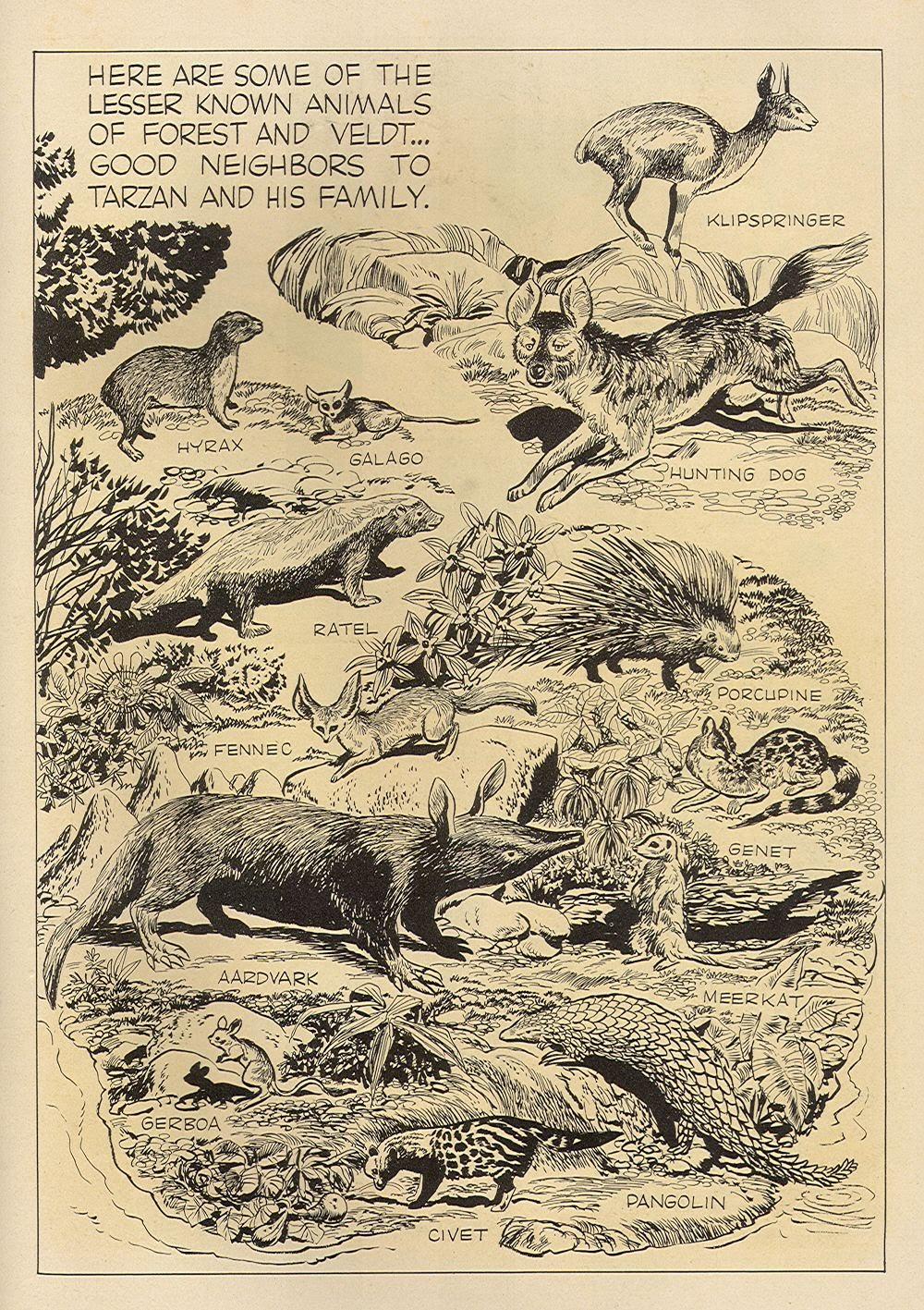 Tarzan (1948) issue 62 - Page 36