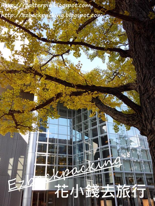 北海道廳舊本廳舍銀杏大道