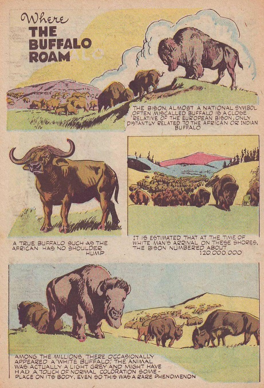 Read online Animal Comics comic -  Issue #25 - 46