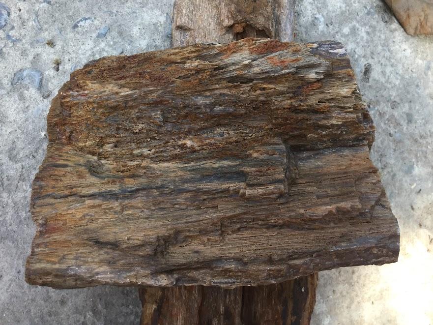 đá gỗ hóa thạch có nhiều họa tiết đẹp mắt, góp phần tạo nên một bố cục hoàn chỉnh cho hồ thủy sinh