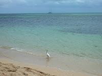 Green Island, Cairns, Australia, vuelta al mundo, round the world, La vuelta al mundo de Asun y Ricardo