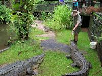 Cocodrilos, Australia, vuelta al mundo, round the world, La vuelta al mundo de Asun y Ricardo