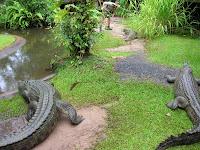 cocodrilos,cairs tropical zoo,gran barrera de coral, cairs, australia, vuelta al mundo, round the world, información viajes, consejos, fotos, guía, diario, excursiones