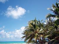 cocoteros, isla de san andres, colombia, caribe, San Andres Island, Colombia, Caribbean,  vuelta al mundo, asun y ricardo, round the world