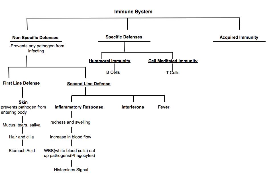 virus diagram worksheet wiring for house lighting mrs. stein's 3rd period sts biology: immune system!