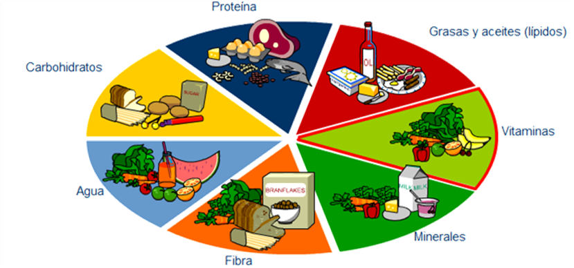 dieta balanceada de proteinas y carbohidratos
