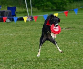 Dublin Catching a Frisbee