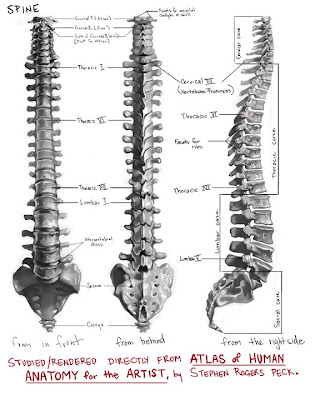 Labeled picture of the spine