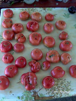 ντομάτα-Gregory's Altai