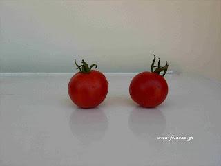ντομάτα stupice