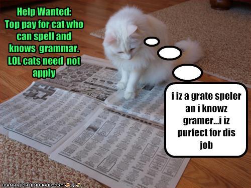 cat+grammar.jpg