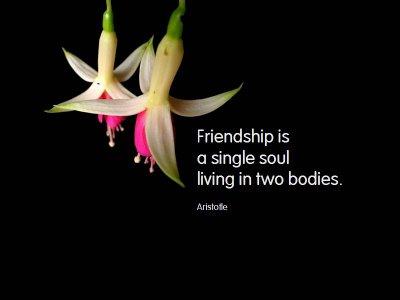 opera poltergeist friendship day quote friends quote wish
