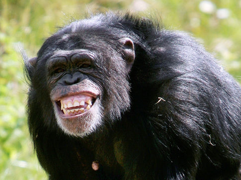 Related Keywords & Suggestions for scared chimpanzee
