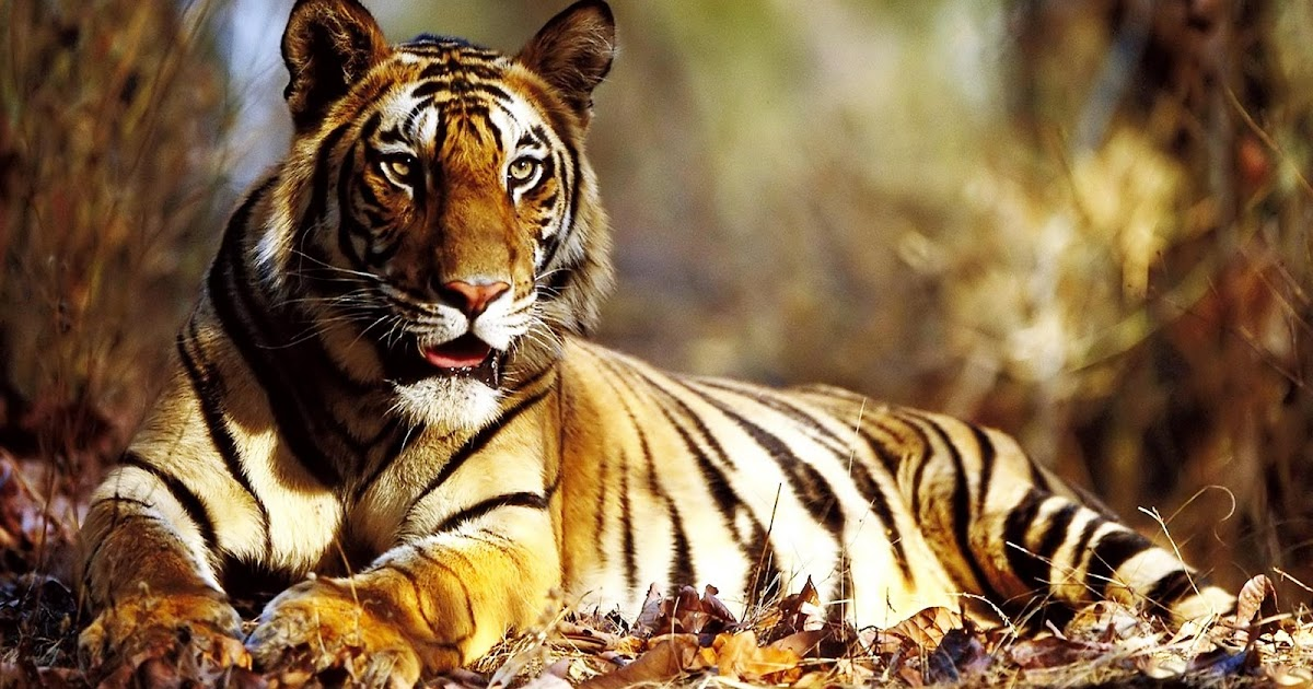 Pictures for everyone no trash big cats little cats - How do you make wild animal in little alchemy ...