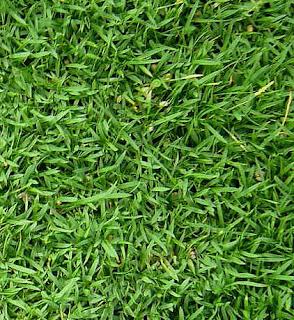 Rumput Sangat Bersahabat Dengan Pekarangan Rumah Anda