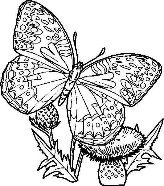 Dibujo De Mariposas Para Imprimir Y Colorear Lámina Para