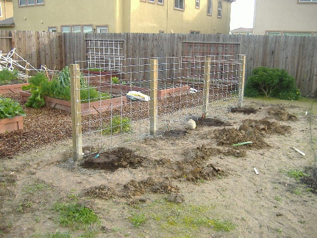 Sacramento Vegetable Gardening The Wrong Way To Build A Grape Arbor