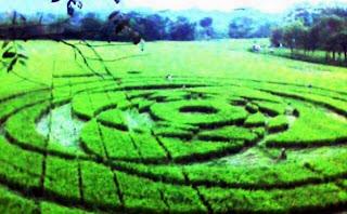 lingkaran crop circle yogya sleman