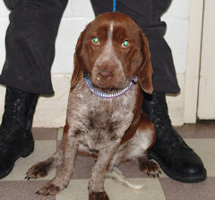 RESCUED!!!!2/18/10 Heartbreaker. Pointer Mix Owner Surrendered