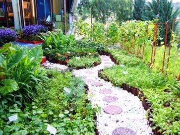 Hakikatnya Taman Dapur Memang Cantik Dan Bermanfaat Kepada Penggunanya