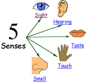 Five Senses Diagram 2001 Ford Focus Fuse Box Explained For Children Hearing Touch Sight Smell And About