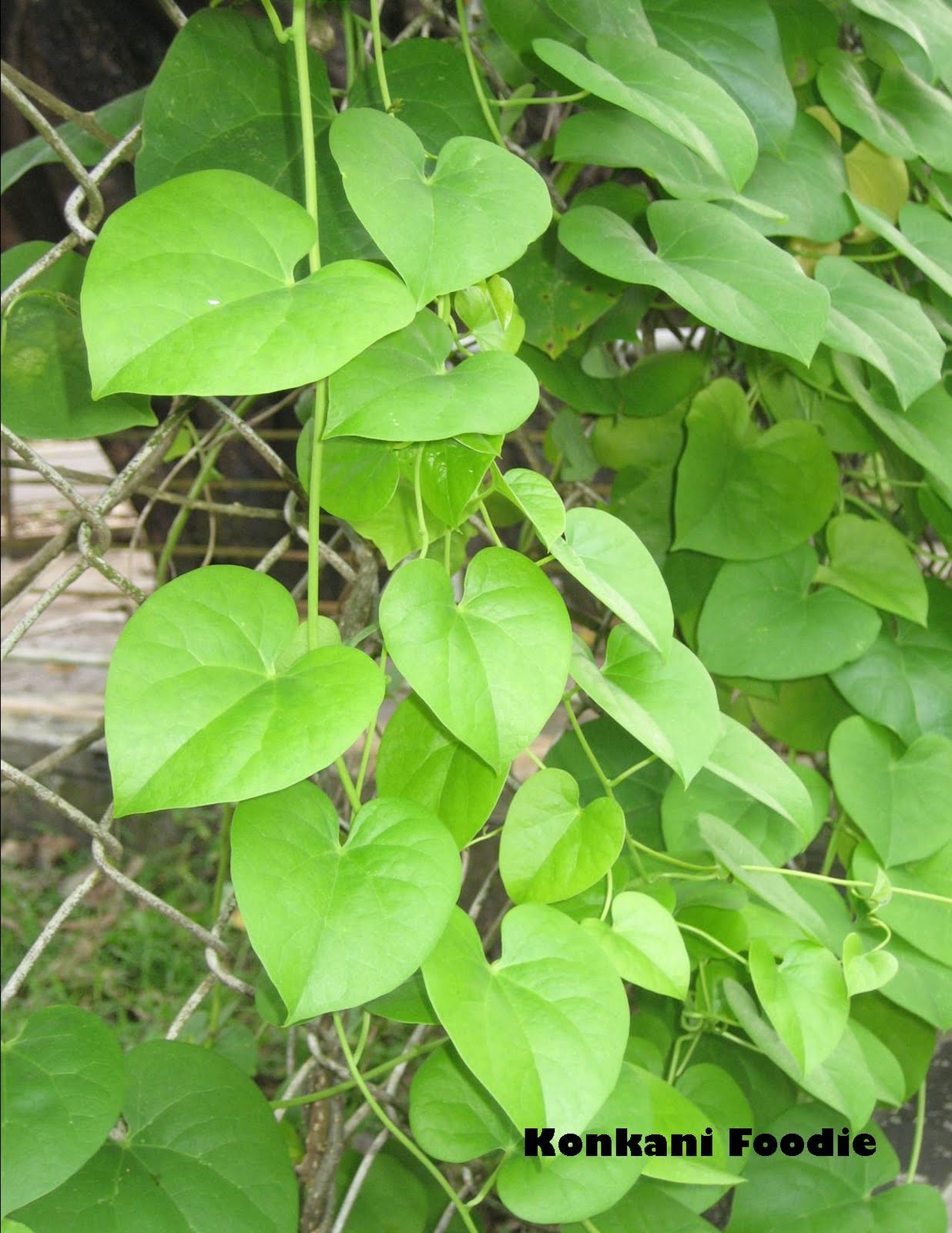 Leaf Food Recipes