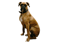 Elbow Dysplasia In Dogs Natural Treatment