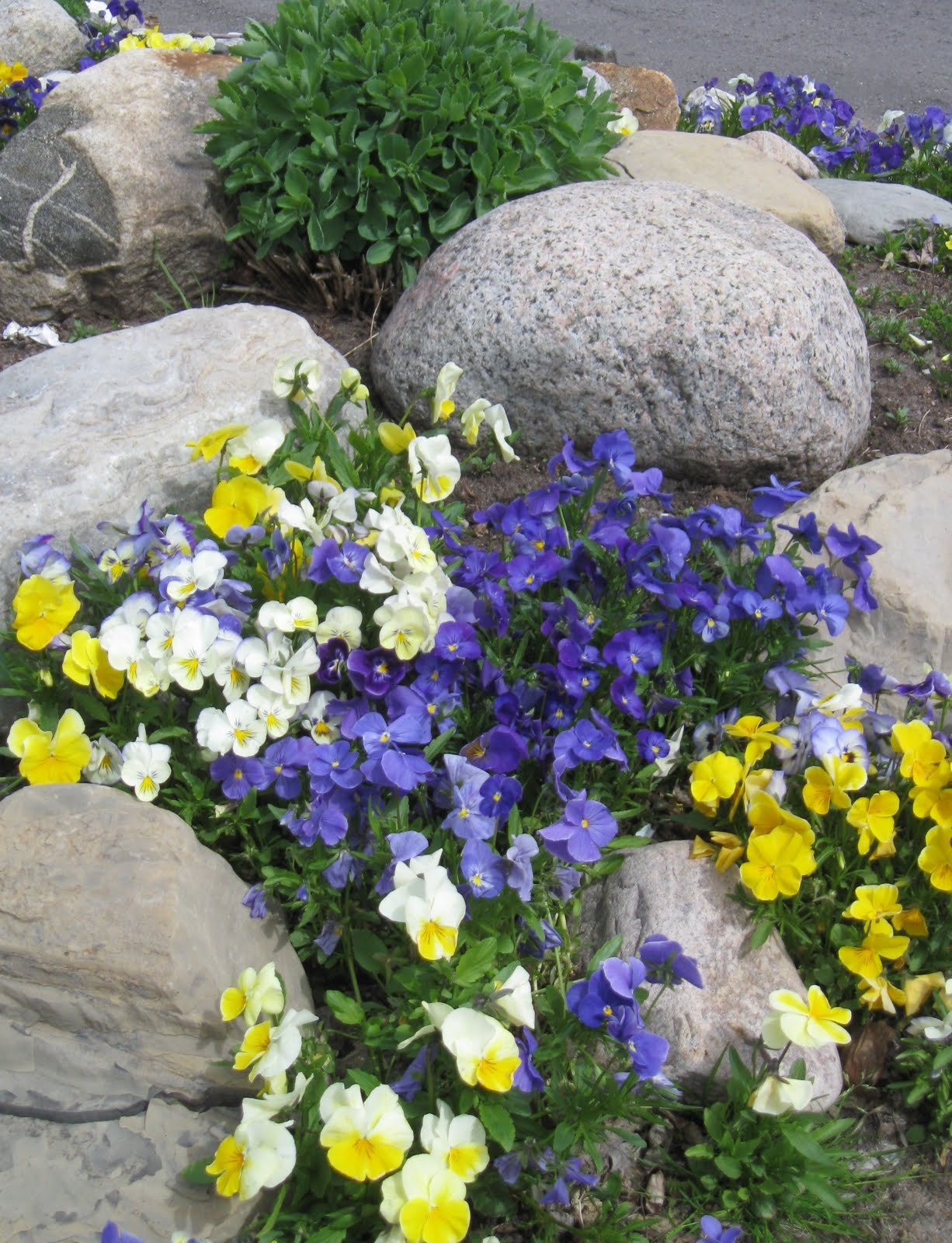 Garden Dream: ROCK YOUR LANDSCAPE on Backyard Rocks  id=20348