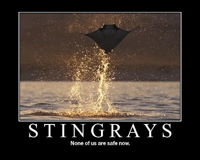 flying stingrays poster