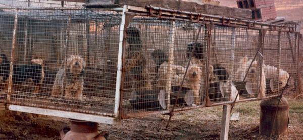 Société pour la Protection des Animaux Canada: Puppy Mills