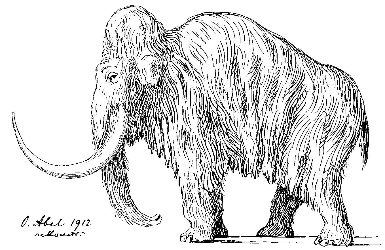 Welt der Steinzeit: Was man über das Eiszeitalter in