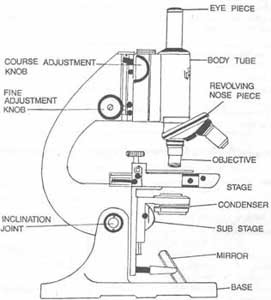 The Journal of Nadirsky: Parts of Microscope (biology lesson)