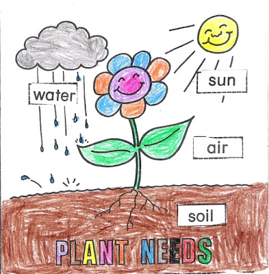 Parts of a Plant and Plant Needs: Standards