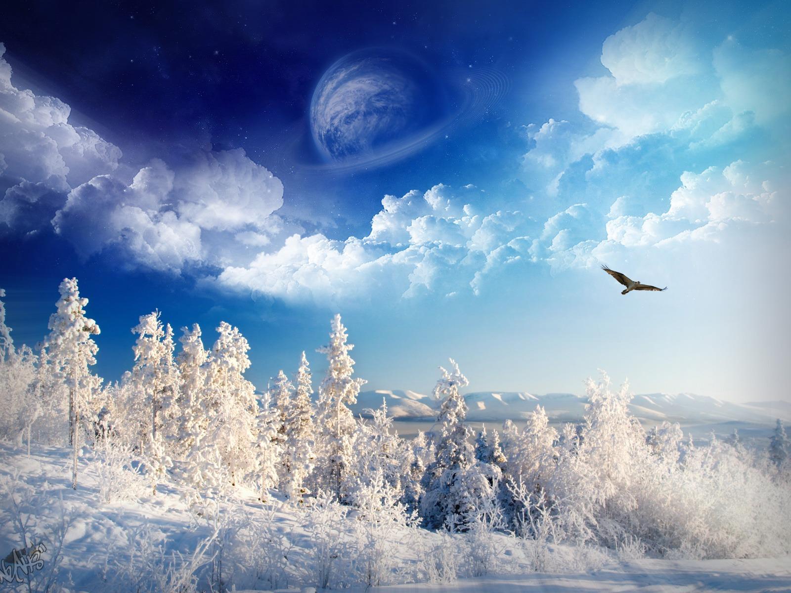 The Yellow Bird: Winter