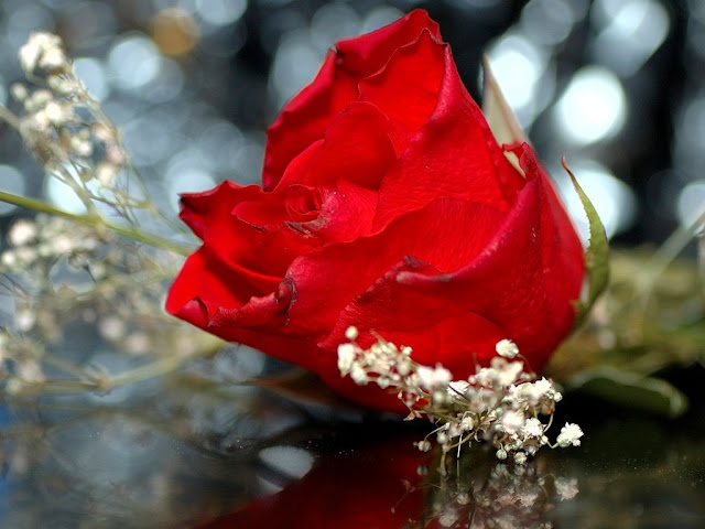 Beautiful Flower Wallpapers Flower Photo Images