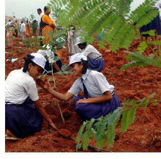 DOVIA: TREE PLANTATION